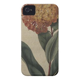 Scarlet Ixora Case-Mate iPhone 4 Cases