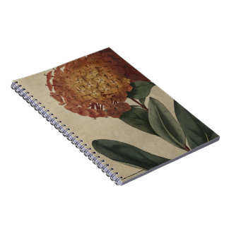 Scarlet Ixora Notebooks
