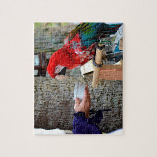 scarlet macaw baby offered dish puzzle