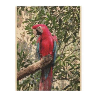 Scarlet Macaw bird Wood Wall Art