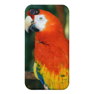 Scarlet Macaw Cover For iPhone 4