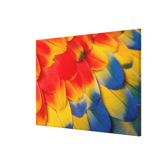 Scarlet Macaw Covert Feathers Canvas Print