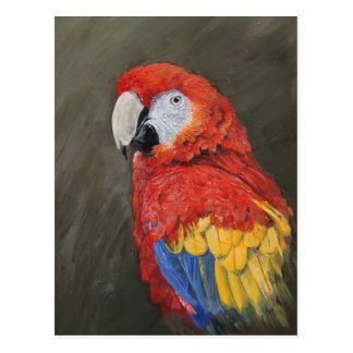 Scarlet Macaw created for you Postcard