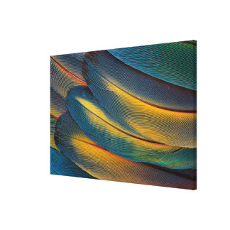 Scarlet Macaw feather close up Canvas Print