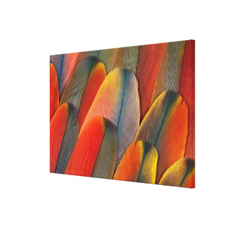 Scarlet Macaw Feather Close-Up Canvas Print