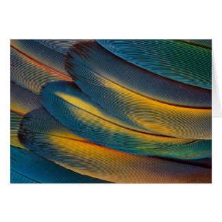 Scarlet Macaw feather close up Card