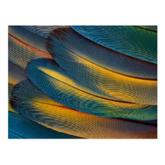 Scarlet Macaw feather close up Postcard