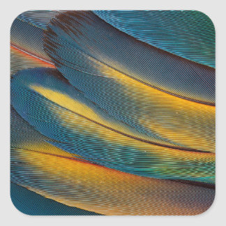 Scarlet Macaw feather close up Square Sticker