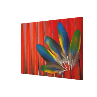 Scarlet Macaw Feather Design Canvas Print