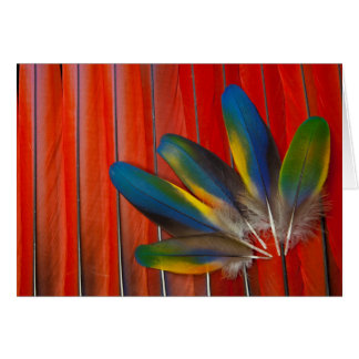 Scarlet Macaw Feather Design Card
