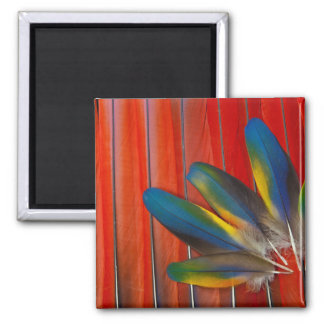 Scarlet Macaw Feather Design Magnet