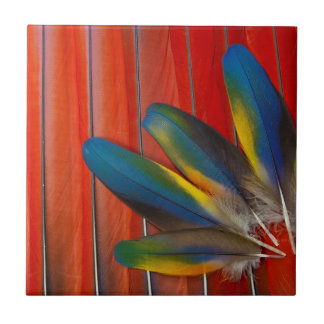 Scarlet Macaw Feather Design Tile
