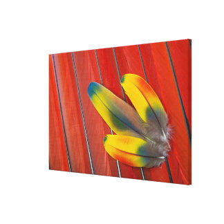 Scarlet Macaw Feather Still Life Canvas Print