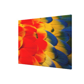 Scarlet Macaw Feathers Canvas Print