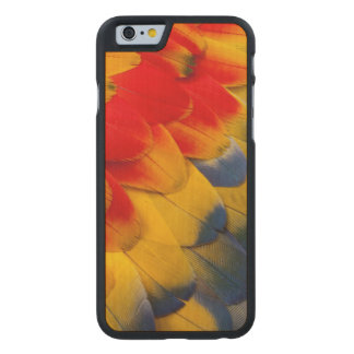Scarlet Macaw feathers close-up Carved Maple iPhone 6 Case