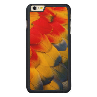 Scarlet Macaw feathers close-up Carved Maple iPhone 6 Plus Case