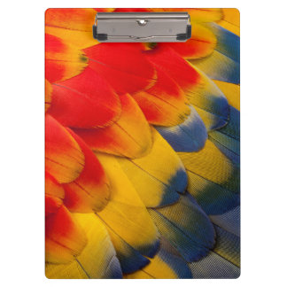 Scarlet Macaw feathers close-up Clipboard