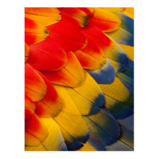Scarlet Macaw feathers close-up Postcard