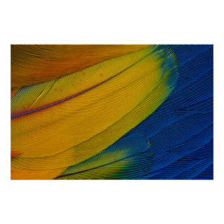 Scarlet Macaw Feathers Close-Up Poster