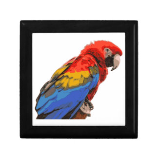 Scarlet_Macaw Gift Box