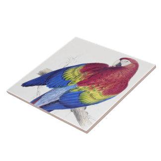 Scarlet Macaw Parrot Bird Wildlife Animal Tile