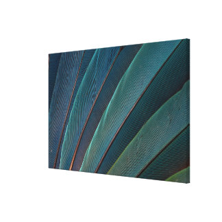 Scarlet macaw parrot feather canvas print