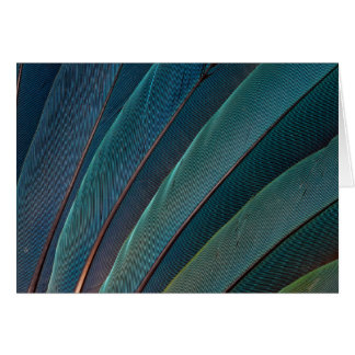 Scarlet macaw parrot feather card