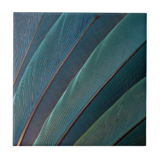 Scarlet macaw parrot feather ceramic tile