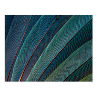 Scarlet macaw parrot feather postcard