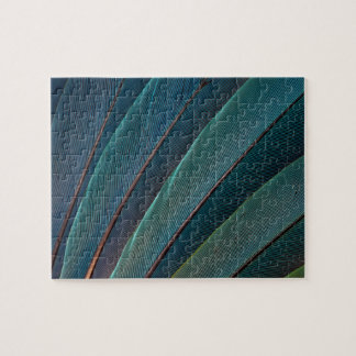 Scarlet macaw parrot feather puzzles