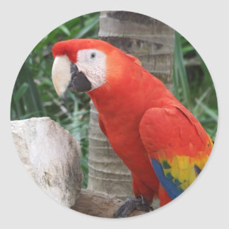 Scarlet Macaw Photography Classic Round Sticker