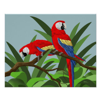 Scarlet Macaw Posters