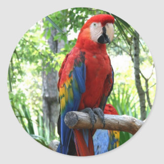 Scarlet macaw, red macaw photograp design classic round sticker