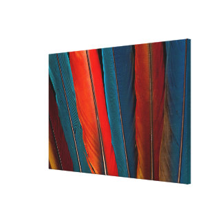 Scarlet Macaw Tail Feathers Canvas Print