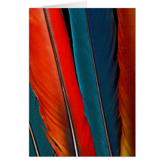 Scarlet Macaw Tail Feathers Card
