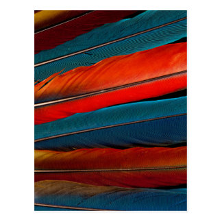 Scarlet Macaw Tail Feathers Postcard