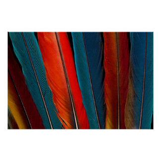 Scarlet Macaw Tail Feathers Poster