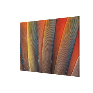 Scarlet Macaw Wing Detail Canvas Print
