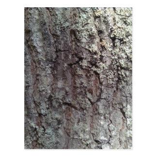 Scarlet Oak Tree Bark Postcard
