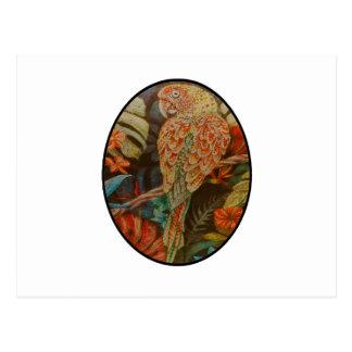 Scarlet Parrot Postcard