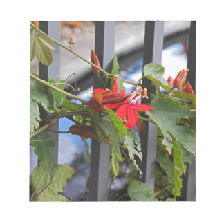 Scarlet Passion Flower Notepads