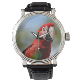 Scarlet Red Macaw Watch