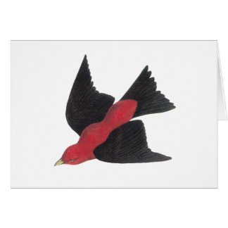 Scarlet Tanager a American Song Bird Card