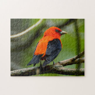Scarlet Tanager Bird Puzzle