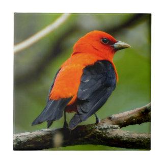 Scarlet Tanager Ceramic Photo Tile