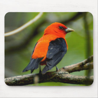 Scarlet Tanager Mousepad