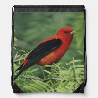 Scarlet Tanager, Piranga olivacea,male on Drawstring Backpack