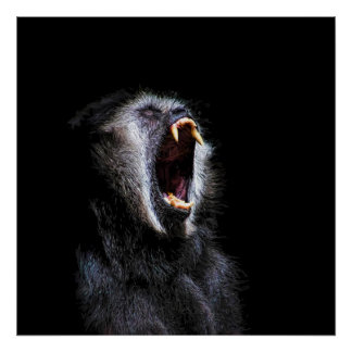 Scary Black Gibbon Monkey Vicious Fanged Teeth Poster