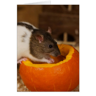 scary Black Hooded rat eating pumpkin seeds Card