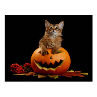Scary Halloween Pumpkin And Somali Kitten Postcard
